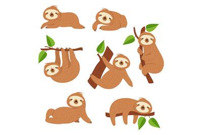 Cute sloths. Cartoon sloth hanging on tree branch. Baby jungle animal