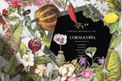 Vintage botanical set - Cornucopia