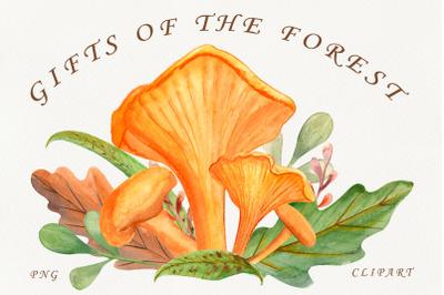 Chanterelles. Mushrooms. Watercolor forest clipart