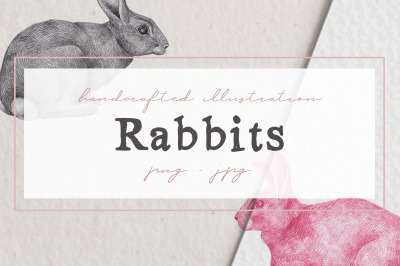 Hand drawn Rabbits Illustrations