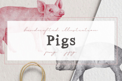 Hand drawn Pigs Illustrations
