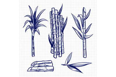 Hand drawn sugar cane set vector illustration