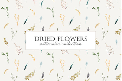 Dried Flowers. Watercolor Collection. Patterns and Cliparts