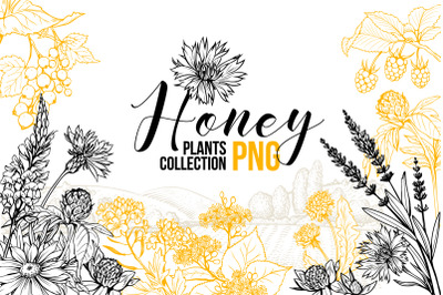 Honey Plants Engraving Collection