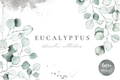 EUCALYPTUS - watercolor green leaves
