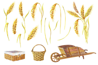 Watercolor set of ears of ripe wheat,wicker baskets and wooden garden
