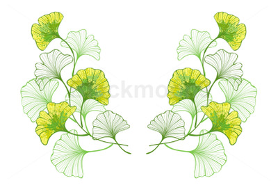 Symmetrical Pattern of Colorful Leaves of Ginko Biloba