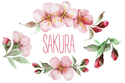 Sakura watercolor set