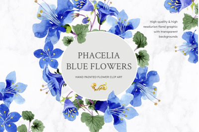 Phacelia or Bellflower's watercolor clipart blue png