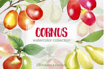 Watercolor Flowers Yellow Cornus Mas png