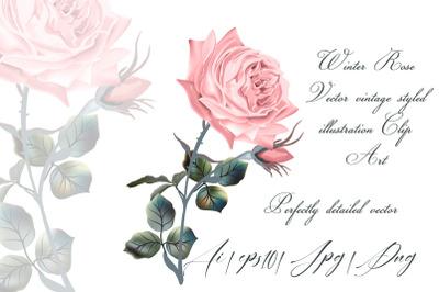 Winter rose, high detailed vector rose illustration