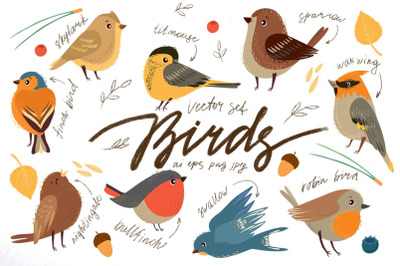 Little birds. Vector set