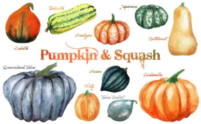 Watercolor Pumpkin & Squash Cliparts