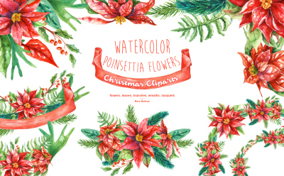 Watercolor Poinsettia Flowers, Christmas Cliparts