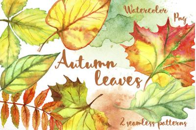 Autumn leave. Watercolor.