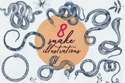 8 Snake Illustrations