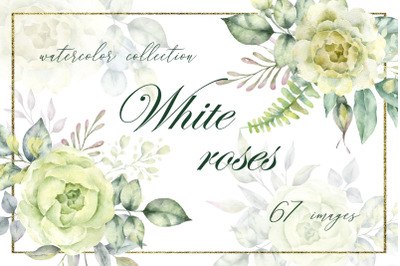 White roses.Watercolor clipart collection with white roses and eucalyp