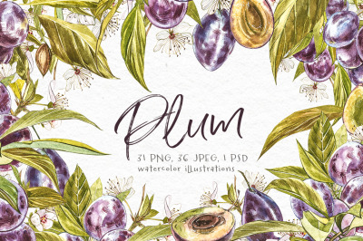 Plum in botanical style