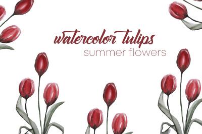 watercolor tulips. summer flowers