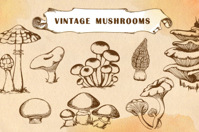 Vintage Hand Drawn Mushrooms