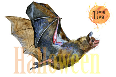 Watercolor illustration of a bat in white background.