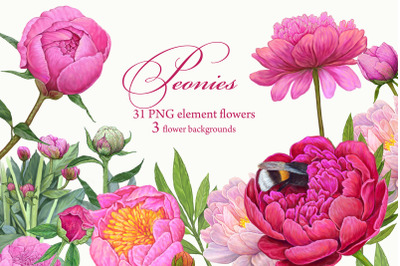 Pink Peonies Clipart Floral elements 34 PNG