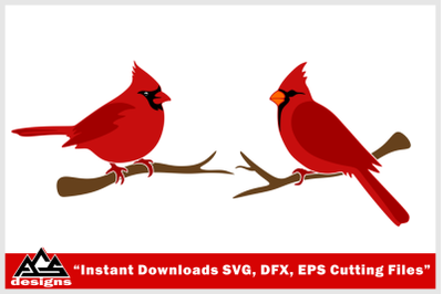 Bird Cardinal Svg Design