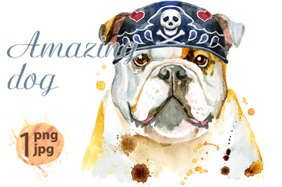 Watercolor portrait of bulldog wearing biker bandana
