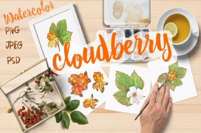 Watercolor berries, leaves and flowers of northern cloudberries.