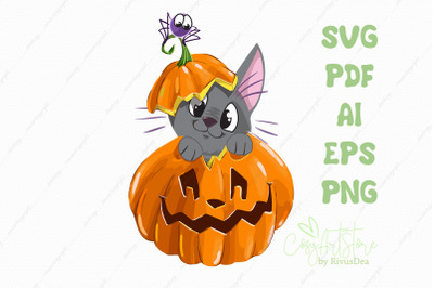 Black kitten on Pumpkin SVG download, Cute cat PNG, kitten with spider