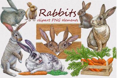Rabbits clipart illustrations