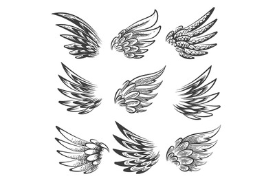 Bird Wings Logo or Emblem Set. Vector illustration.