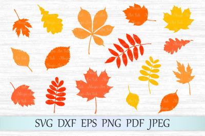 Fall Leaf SVG, Autumn Leaves SVG file, Fall svg, Maple Leaf SVG