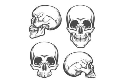 Human Skull Front and Side View Set