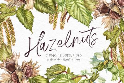 Hazelnut in botanical style