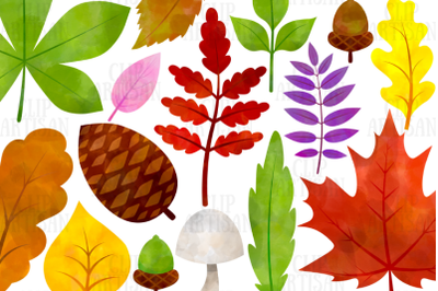 Watercolor Fall Leaves Clipart, Autumn Floral Clip Art