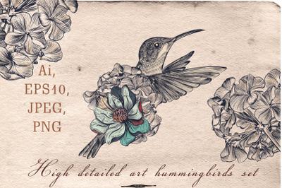 Collection of vector hummingbirds Vol.1