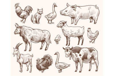 Sketch farm animals. Pig and cat, bull and cow, rooster and chicken, g