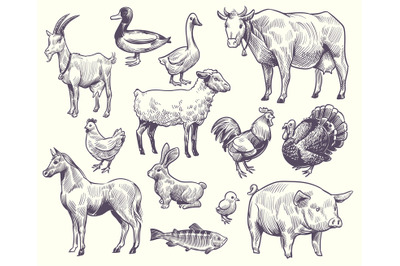 Hand drawn farm animals and birds. Goat, duck and horse, sheep and cow
