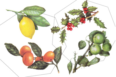 Fruits and berries - vintage, retro botanical plants illustrations set
