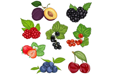 vector set wild berries and fruit illustration isolated