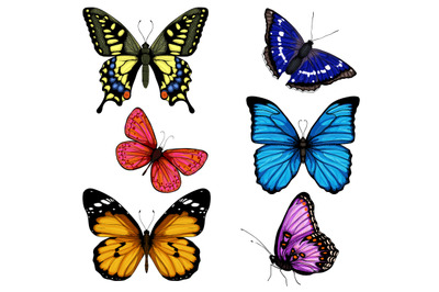 Vector butterfly hand drawn set colorful on white background.