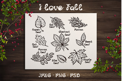 9 hand sketched cards with fall leaves