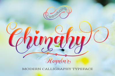 Chimahy Regular