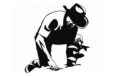farming, farmer harvests crops, planting svg, svg file