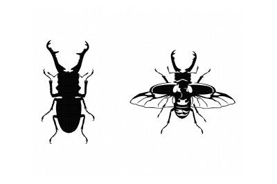 stag beetle svg, dxf, png, eps, cricut, silhouette, cut file, clipart