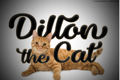 Dillon the Cat