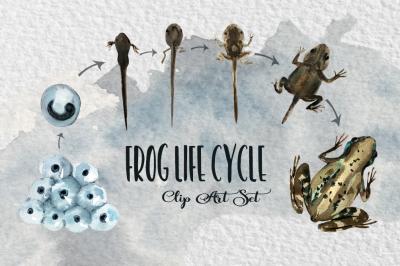 Watercolor Frog Life Cycle Clip Art