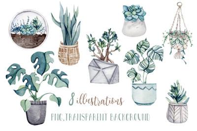 Watercolor Home plants illustrations