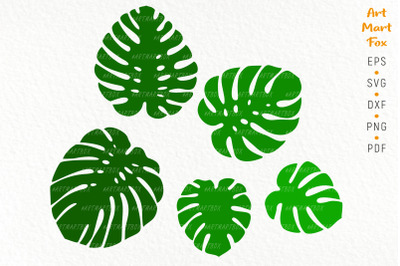 Set of five silhouettes of monstera leaves